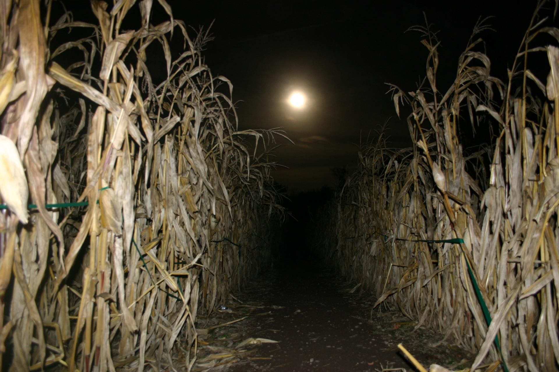 Moonlight corn maze