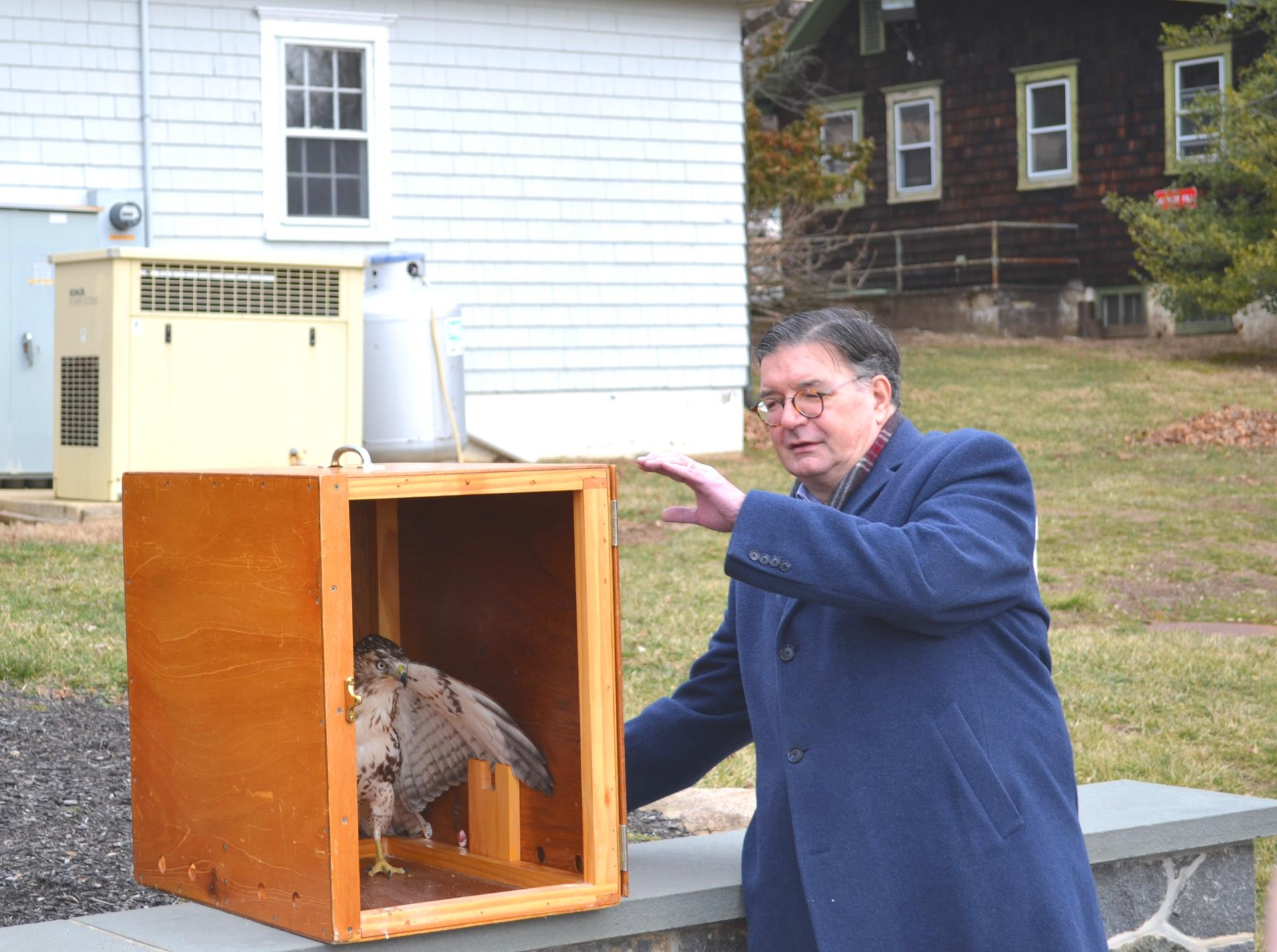 County Executive Hughes releases a rehabilitated red-tailed hawk